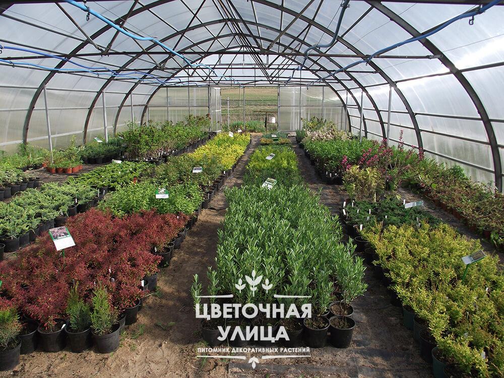 Цветочная улица - Питомник декоративных растений